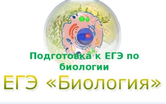 Онлайн-консультация по подготовке к ЕГЭ по биологии